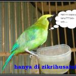 Sajak: Aku seekor burung yang ingin bebas