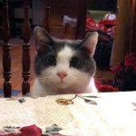 Mana makanan saya???