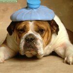 Sakit kepala!