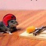 Tikus yang bijak meloloskan diri dari perangkap tikus dan tips menghalau tikus