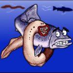 Ikan Sea lamprey, belut penghisap darah yang brutal!!