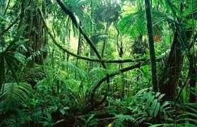 hutan, gambar hutan, sesat di hutan,