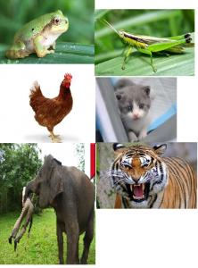katak, belalang, ayam, gajah, harimau, kucing,